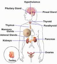 Hormonas - Glandulas y organos que secretan hormonas
